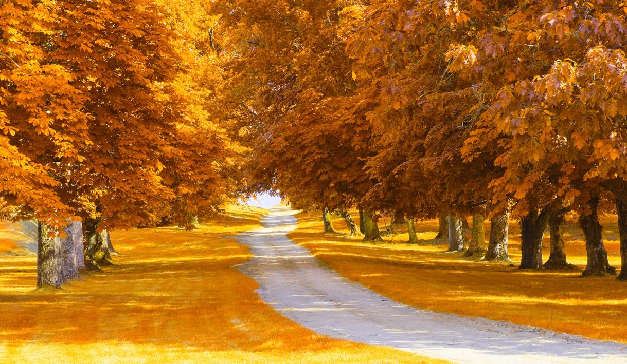 Sonbahar manzaralı duvar kağıtları